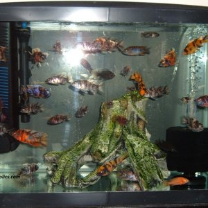 20-gallon-aquarium-002.JPG