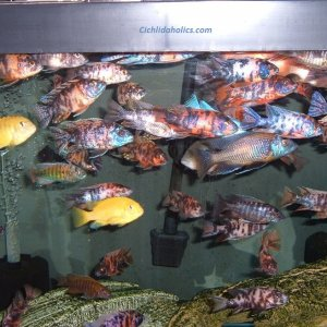 125-gallon-aquarium-003.JPG