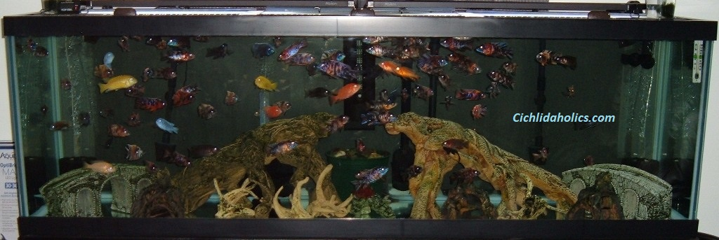 125-gallon-aquarium-001.JPG