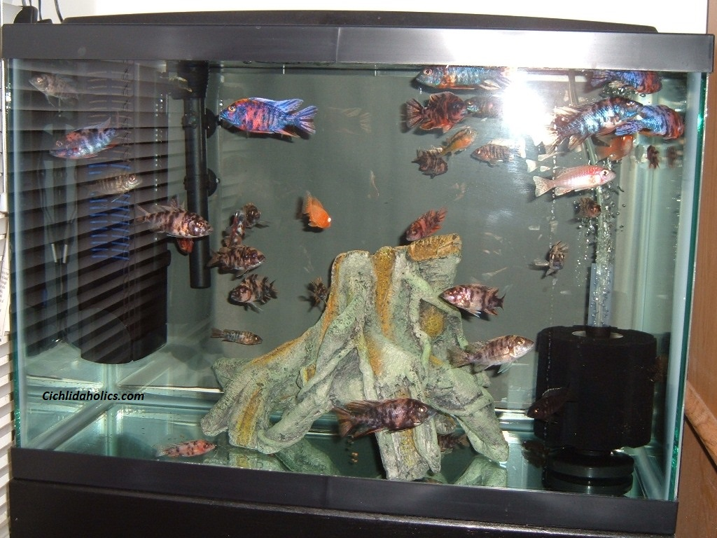 20-gallon-aquarium-001.JPG