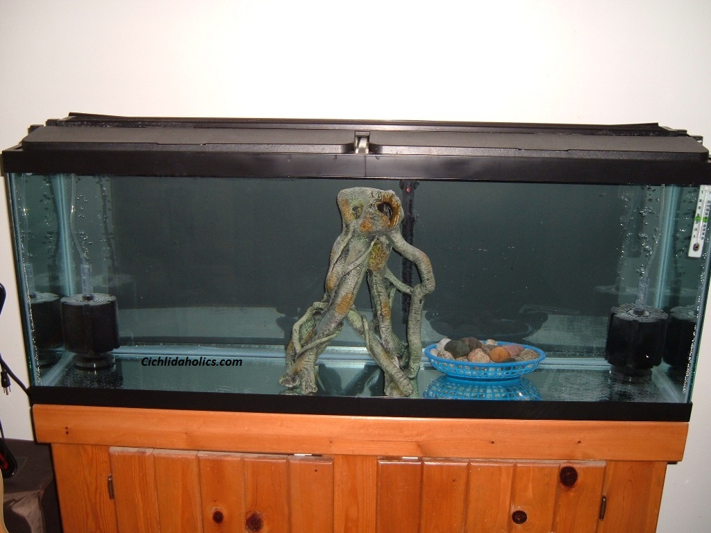 55-gallon-aquarium-001.JPG